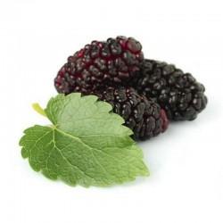 Ароматизатор Symrise Boysenberry 5 ml (Шелковица)