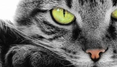 Купон ко дню кошек